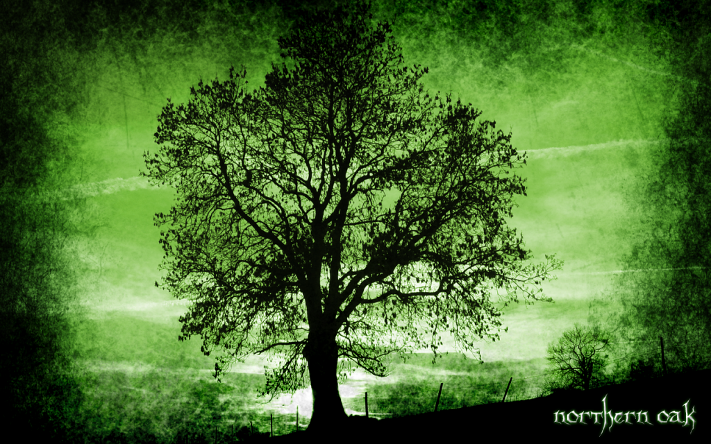 Wallpaper: Northern Oak